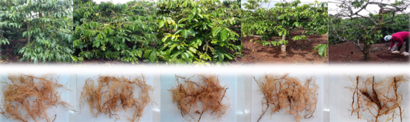 Replanting Vietnam